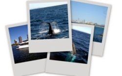 Whale watching in Australia includes the majestic humpback whales and other species.