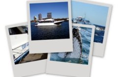 Photos of whale watching.