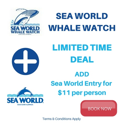 Sea World and Sea World Whale Watch Special Deal
