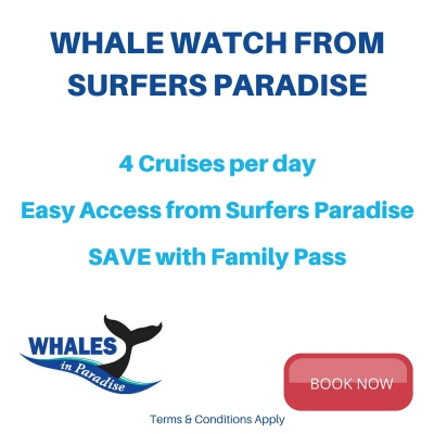 Whale Watching From Surfers Paradise