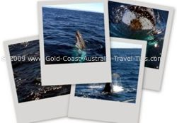 Frequently asked Question - when is the best time for whale watching on the Gold Coast?