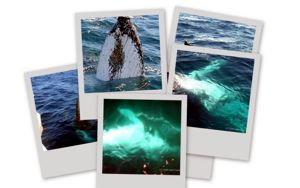 Lots of Big Pictures of Whales!
