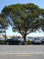 Budds Beach tree