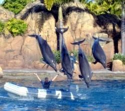 Dolphin Show at Gold Coast Sea World