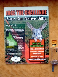 Dreamworld Bilby conservation - have you ever seen a bilby? Once you have you have to help save them!