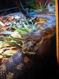 Dreamworld reptile house has snakes, lizards and lot more.