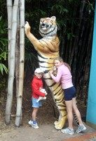 Dreamworld tigers. This one is just before you get to Tiger Island Show.