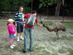 Feeding emu at Currumbin.