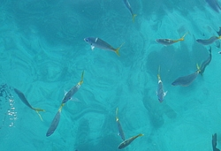 Fish on the Great Barrier Reef Australia
