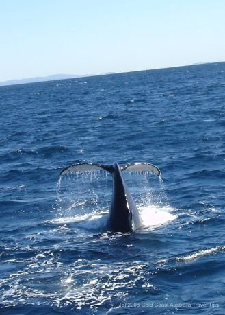 Humpback whale tail photo