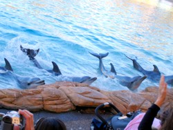 Imagine Dolphin Show at Sea World