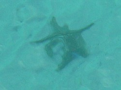You can see how clear the water is. This is a Star fish in Moreton Bay.