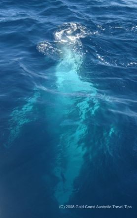Picture of humpback whale under the water.