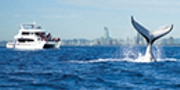 Sea World Whale Watch Season Options