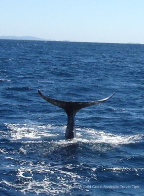 Whale tail picture