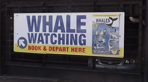 Follow the sign for whale watching in Surfers Paradise.