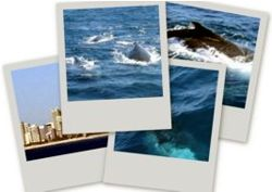 Whale watching tips for Gold Coast Australia