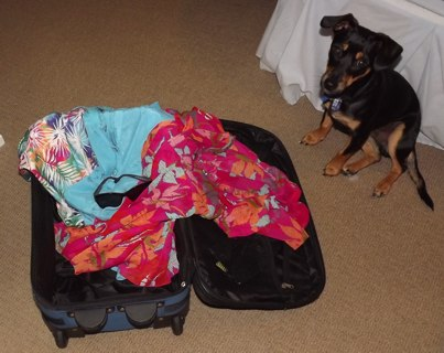 What To Pack and What Not To Pack - Don't Pack The Dog!