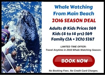 2016 Season Opening Deal for whale watching from Main Beach
