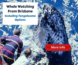 Brisbane Whale Watching Options