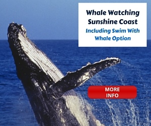 Sunshine Coast Whale Watching Options