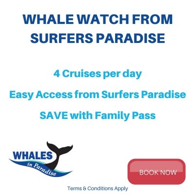 Whale Watching From Surfers Paradise Great Season Opening Deal