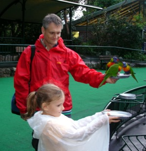 Wild bird feeding the lorikeets at Currumbin.