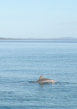 Dolphins in the water at Tangalooma. We saw these on the Eco Cruise.