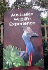 Dreamworld Corroboree formerly Australian Wildlife Experience gives you the opportunity to see some native Australian animals.