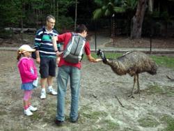 Feeding emu at Currumbin.