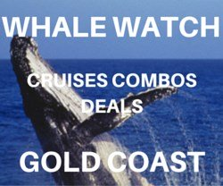 Gold Coast whale watching deals and combinations.