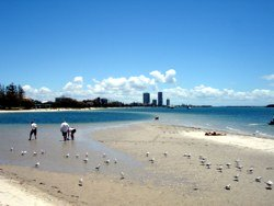 Gold Coast beach - there's plenty to choose from.
