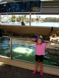 Original Penguin enclosure at Sea World