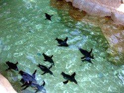 Original Penguins at Sea World
