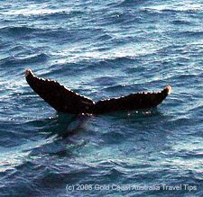 Picture of whale tail