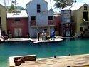 Seal Show at Sea World