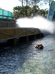 Splashdown at Vikings Revenge Ride Sea World