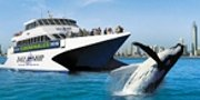 Tall Ship Whale Watch Options