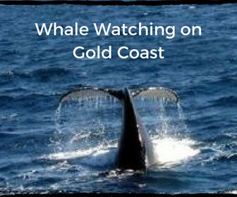 Whale Watching in Gold Coast