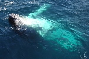 Whale lounging around near boat!