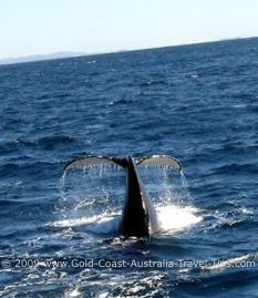 On the Whales in Paradise tour you might see a whale tail or even more!